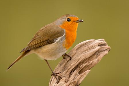 예쁜 새의 성격에 좋은 주황색 붉은 깃털과