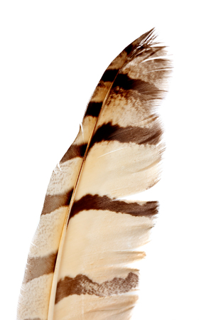 Brown feather isolated on a white background Stock Photo