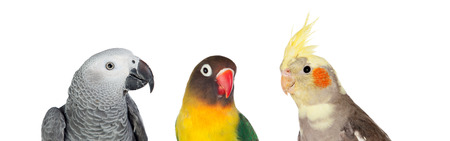Three differents tropical birds isolated on a white background Foto de archivo