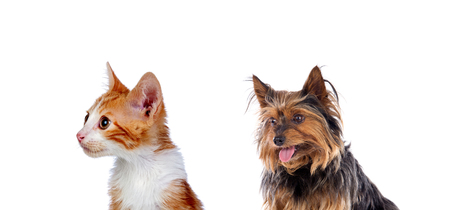 Two beautiful pets isolated on a white background