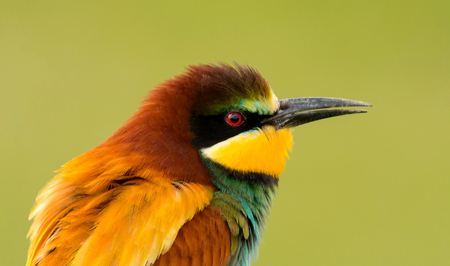 Portrait of a colorful bird close up Banque d'images