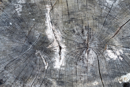 Closeup wooden cut Texture for wallpaper
