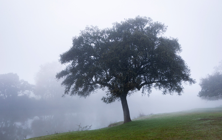 Nice landscape at winter with fog
