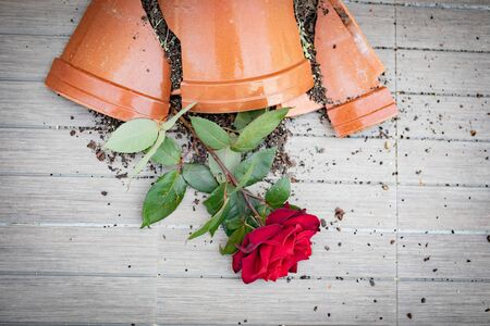 Broken flowerpot with a red rose on the floor Banque d'images - 133514457