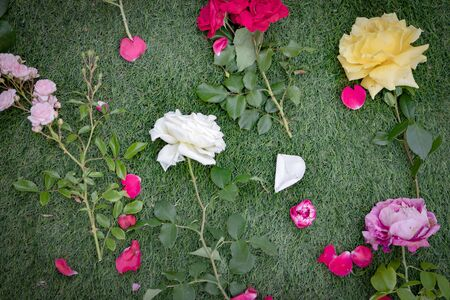 Roses red, pink and yellow cutted on the grass Banque d'images - 133514458