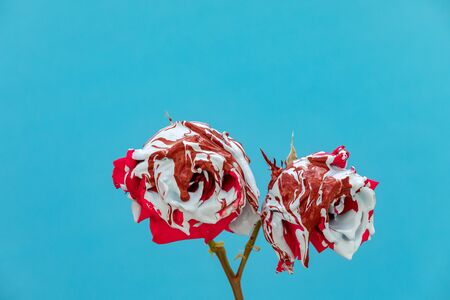 Stained red roses with paint on a blue background Banque d'images - 133514682