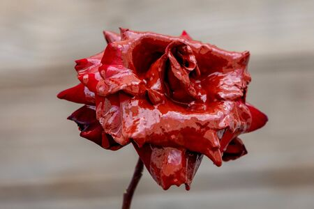 Stained red roses with paint on a wooden background Banque d'images - 133514708
