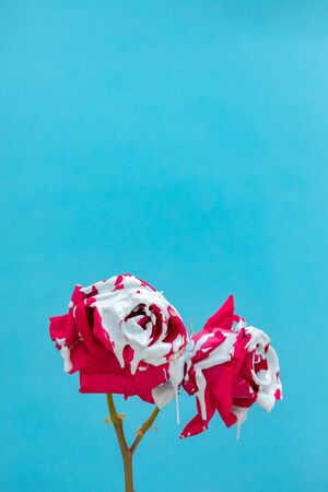 Stained red roses with paint on a blue background Banque d'images - 133514714