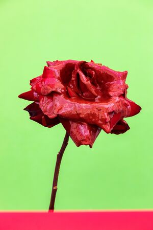 Delicated Red Rose close up on a green background Banque d'images - 133514873