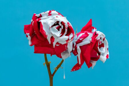 Stained red roses with paint on a blue background Banque d'images - 133514886