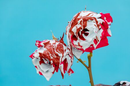 Stained red roses with paint on a blue background Banque d'images - 133514906