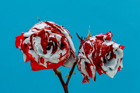Stained red roses with paint on a blue background Banque d'images - 133514908
