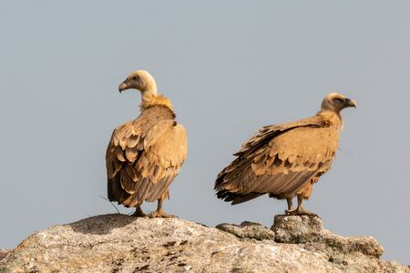 Vultures on a big rock with the cloudy sky in the background Stock Photo