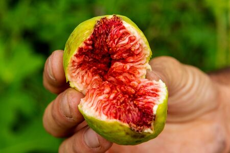 Someone showing a sweet fig with a red color