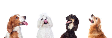 Dogs looking up isolated on a white background