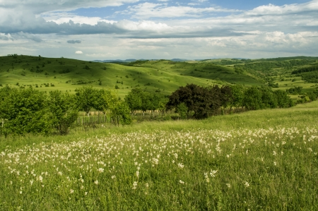 Summer landscape with green grass photo