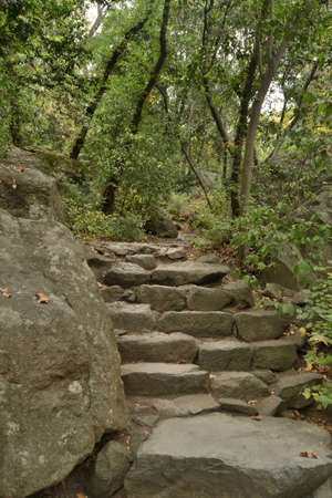 Stone walkway with steps in a shady park
