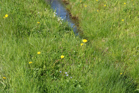 Young juicy meadow grass with yellow white and blue flowers. Stok Fotoğraf