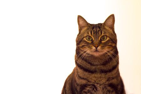 looking ahead: Cat looking straight ahead.