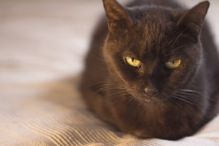 Black cat in relaxed position