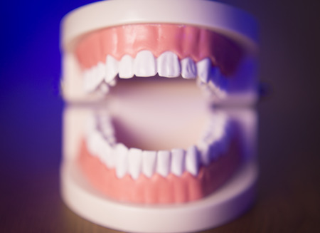 ortodoncia: Denture for dentistry students without transparent orthodontics