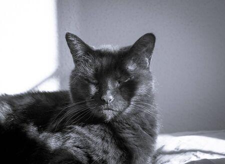 Older black cat