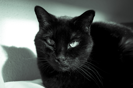 Black cat with visible lump tumor on the lip