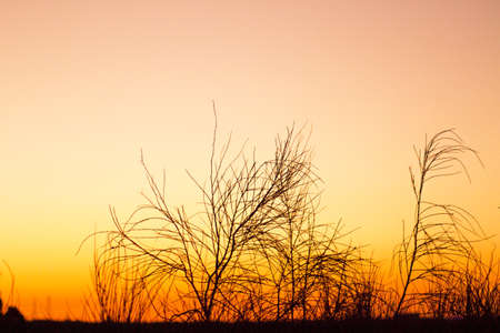 Sunset landscape with tree branches in silhouettes. Feeling of peace and tranquility Stock Photo