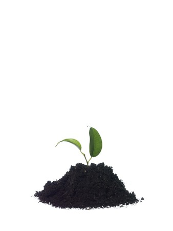 vegetate: Growing plant