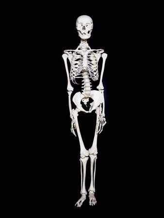 Skeleton towards black background photo