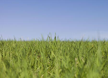 short focal depth: Green grass towards blue sky