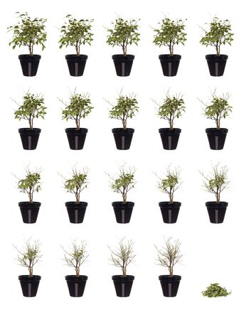 20 pictures of a potted plant in progress Stock Photo - 4916243