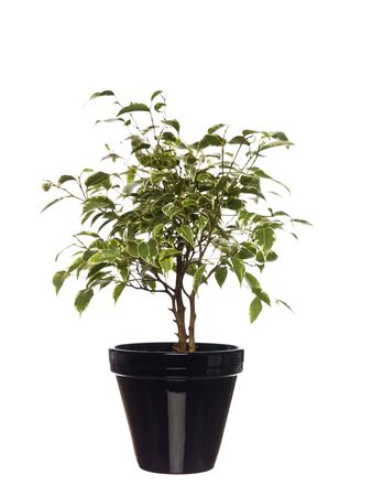 Potted plant towards white background Stock Photo