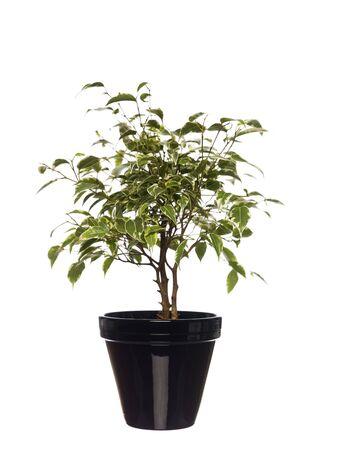 Potted plant towards white background Stock Photo