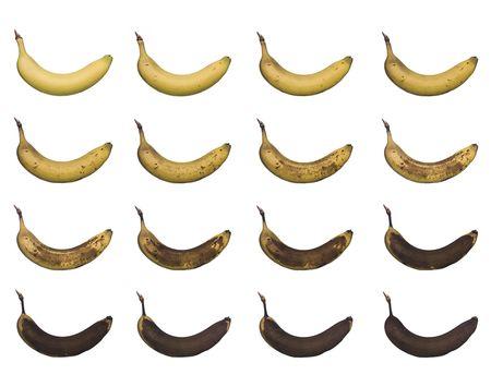 Banana in progress isolated towards white background photo