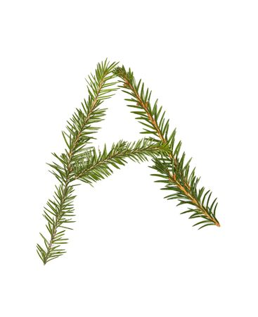 Spruce twigs forming the letter 'A' isolated on white Stock Photo - 5624537