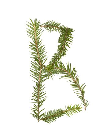 Spruce twigs forming the letter 'B' isolated on white Stock Photo - 5624546