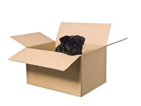 spotted dog: Dog in a box isolated on a white background