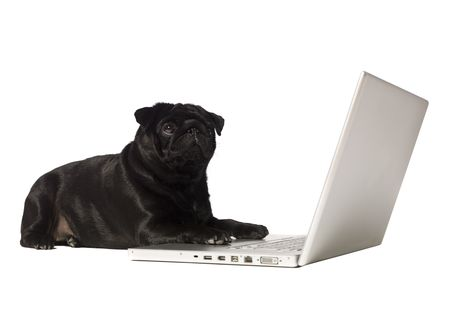 Black dog at the computer isolated on white photo