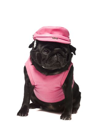 Dog dressed in pink isolated on white photo