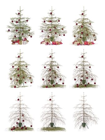 lapse: Time lapse - Christmas tree isolated on a white background Stock Photo