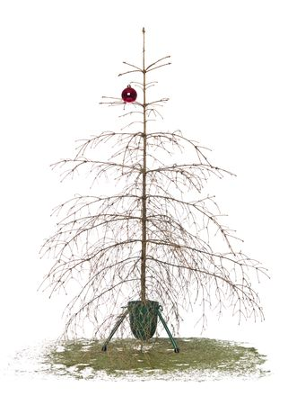 knack: Dead christmas tree isolated on a white background