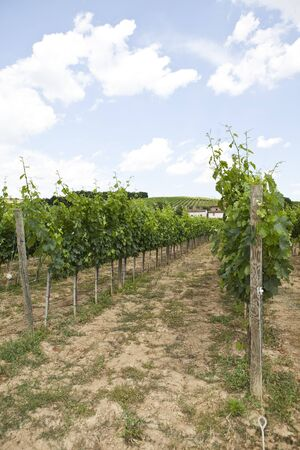 wineyard: View from a Wineyard Stock Photo