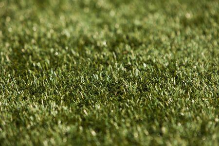 short focal depth: Close up of grass with short focal depth