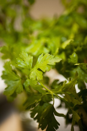 Parsley with short focal depth Stock Photo