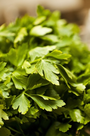 short focal depth: Parsley with short focal depth Stock Photo