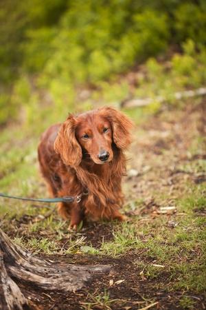 short focal depth: Lonley dog in nature with short focal depth