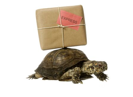 Turtle with a package isolated on white background photo