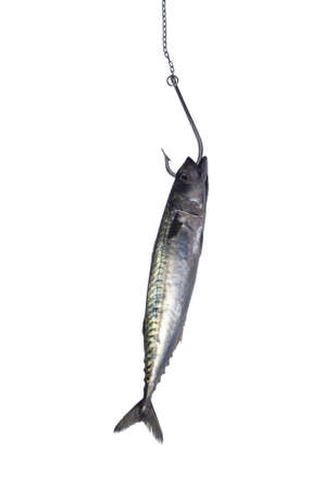 Hooked fish on white background photo