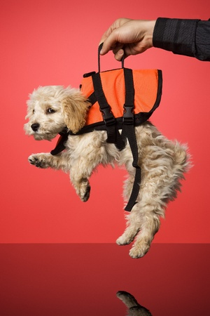 Sweet dog with Life Jacket photo